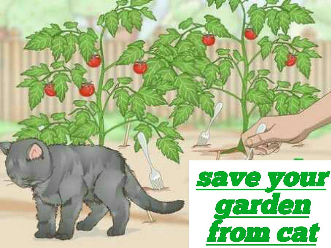 Save your garden from cat pets care - Empecher les chats de venir dans le jardin ...